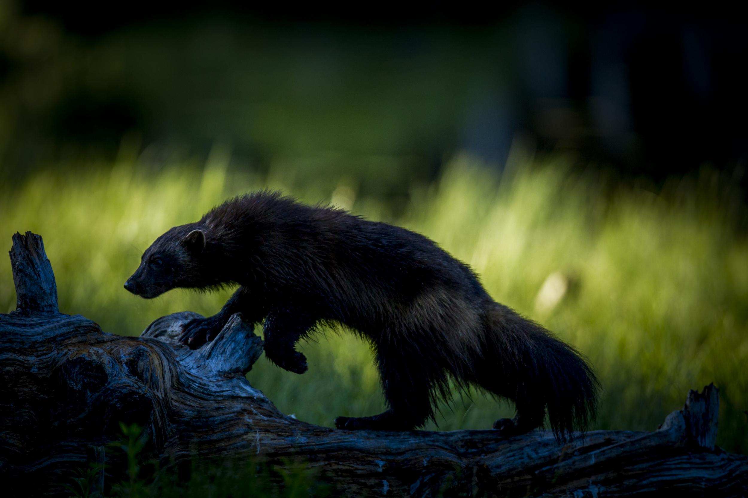 stephaneleroy_wild_finland-24.jpg