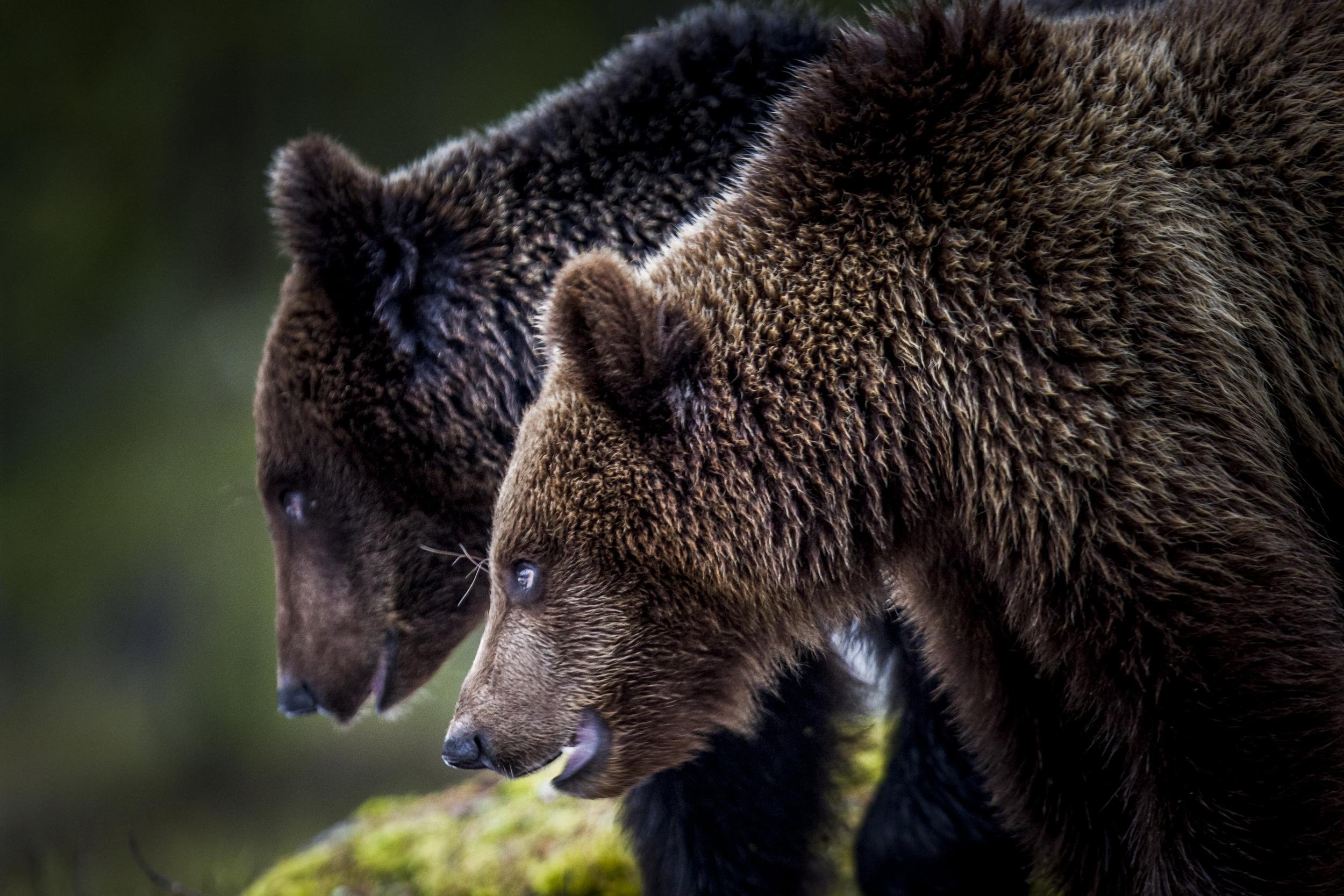 stephaneleroy_wild_finland-37.jpg