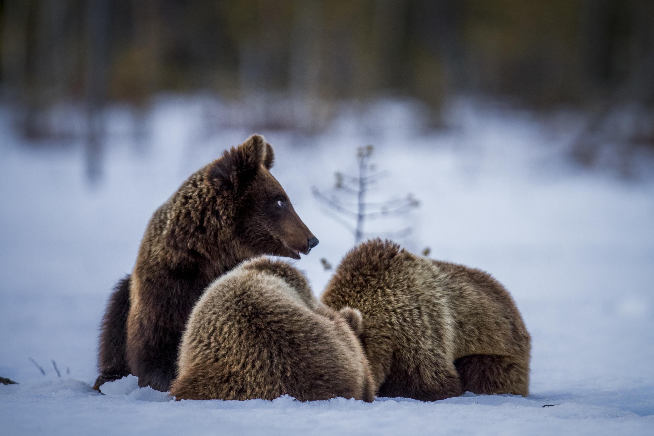 stephaneleroy_wild_finland-58.jpg
