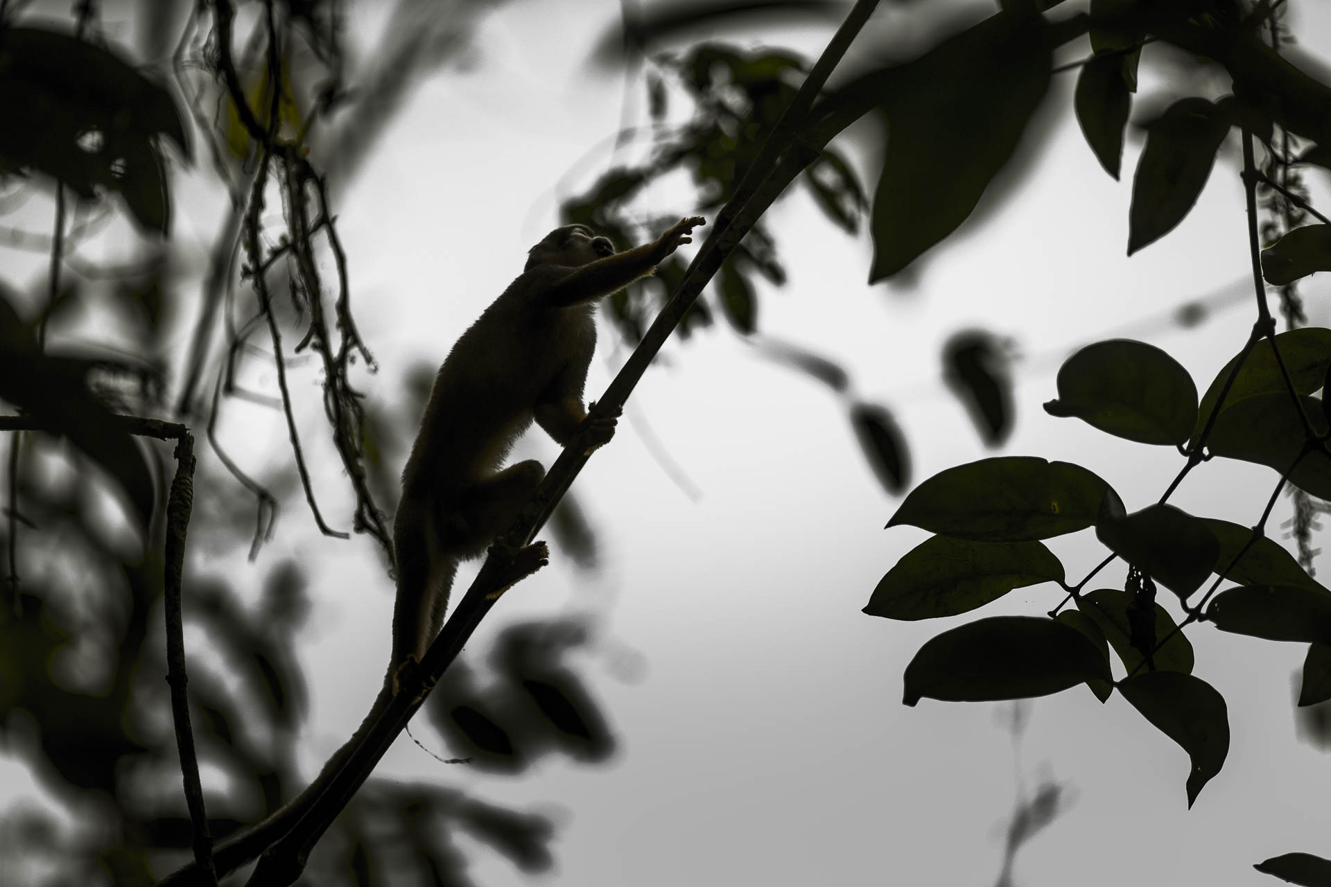 equateur©stephaneleroy-12.jpg