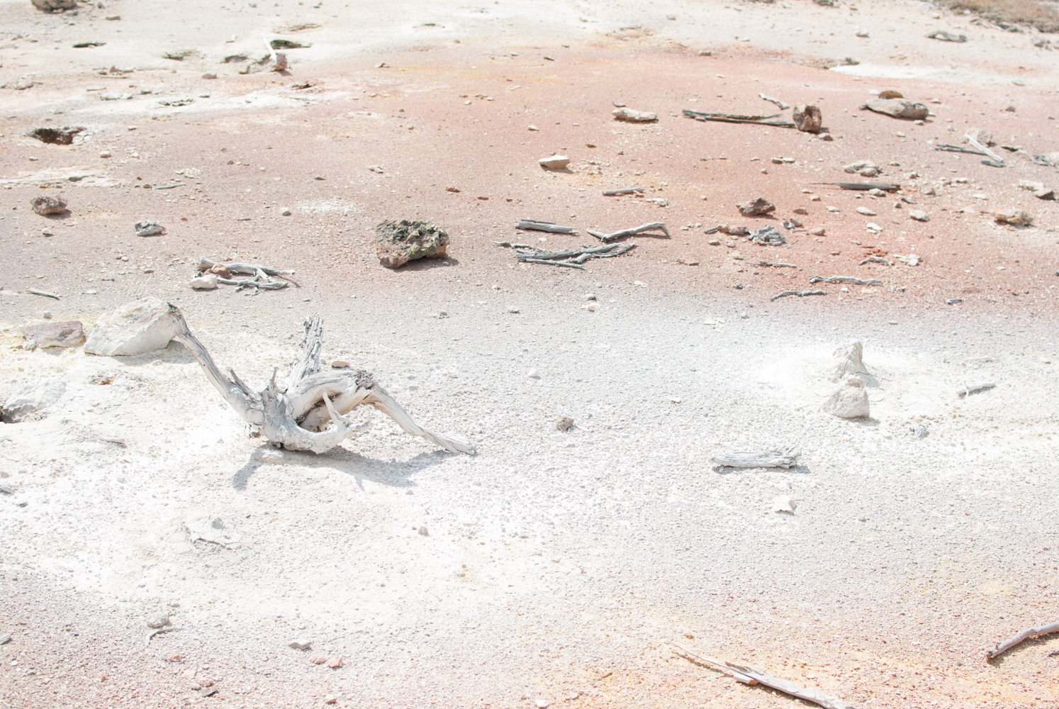 YellowstoneGrandTeton-0761.jpg