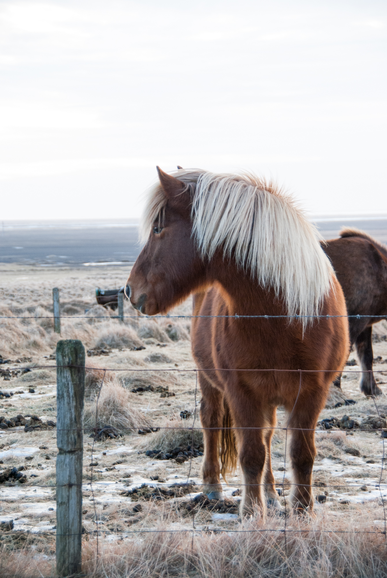 Iceland-0565.jpg