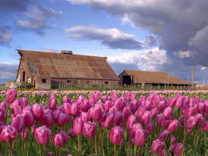 Dutch Hollow Farms