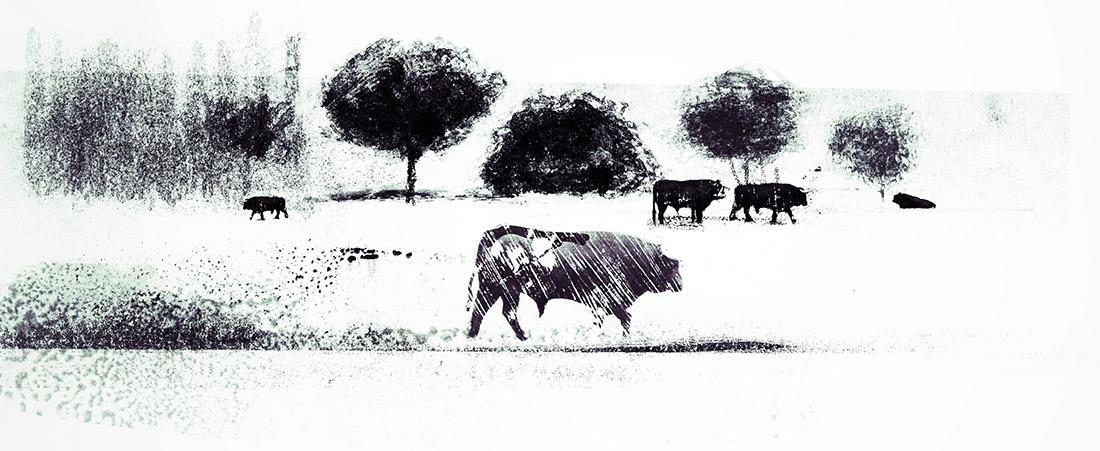 Illustration-David Navas.jpg