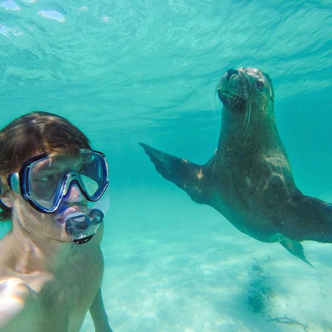 animal-selfie-seal.jpg