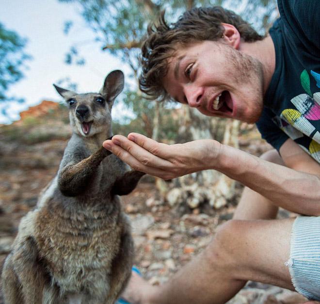 animal-selfie-wow.jpg