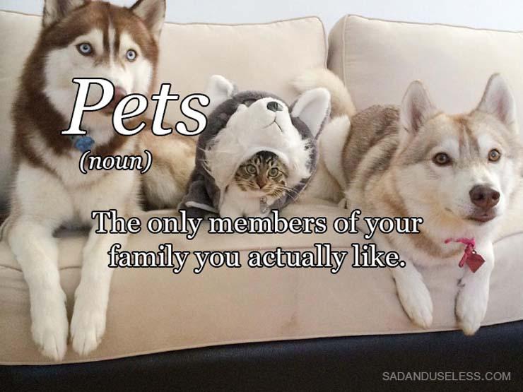 word-pets.jpg