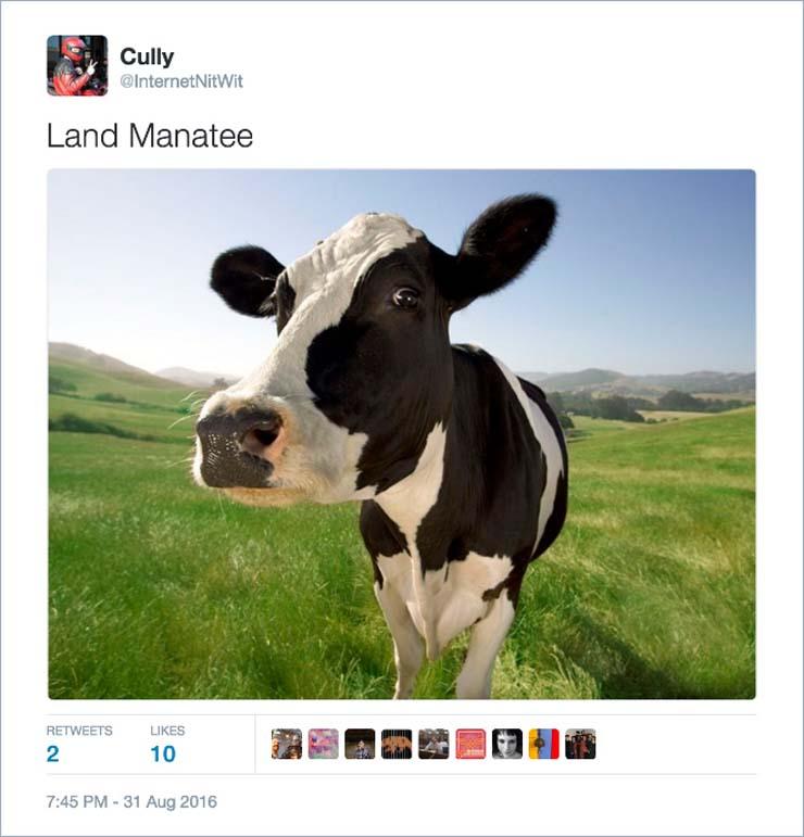name-cow.jpg