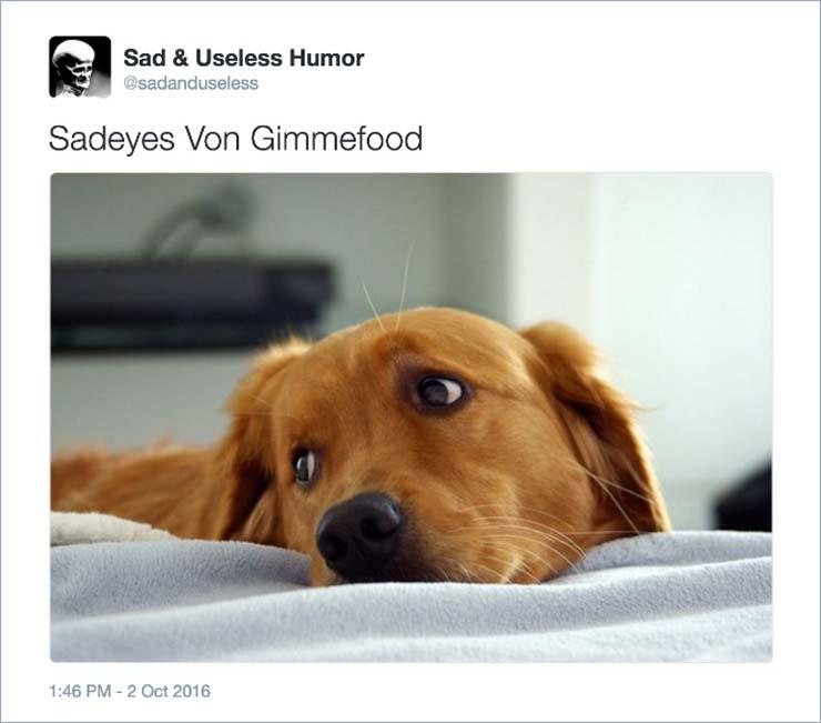 name-dog.jpg