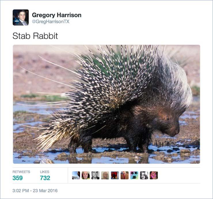 name-stab-rabbit.jpg