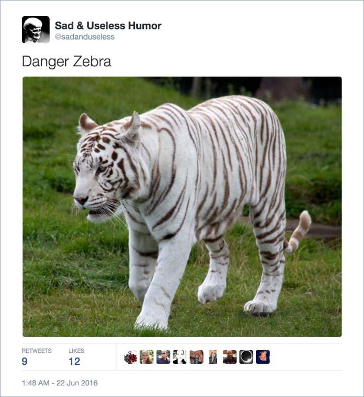 name-zebra.jpg
