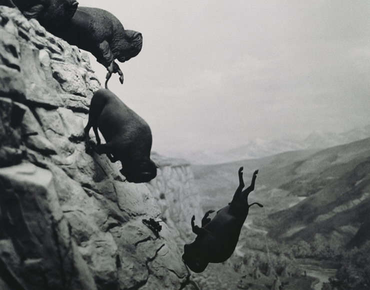 David Wojnarowicz, 'Untitled (Buffaloes)' 1988-89, sold at auction for a record $125,000