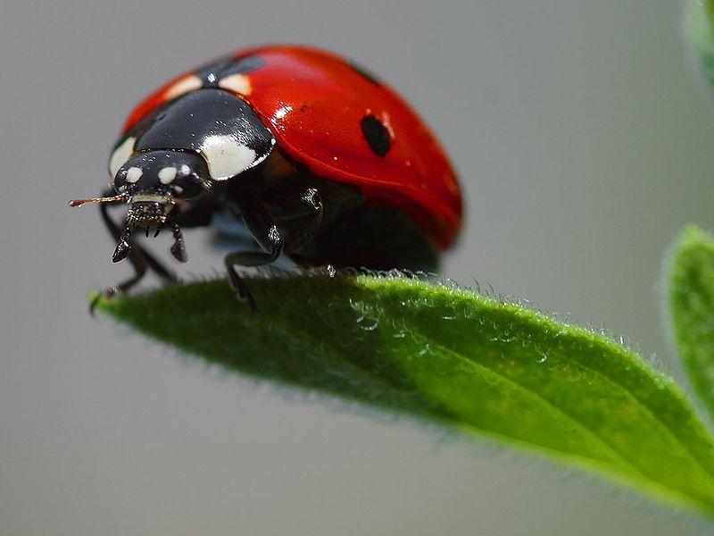 ladybird1.jpg