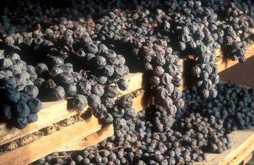 Drying The Grapes (producer website)