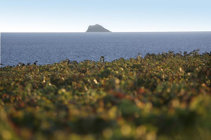 sardinia argiolas 6.jpg
