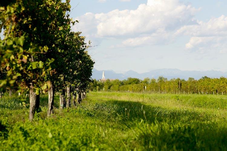Veneto - Bagnoli
