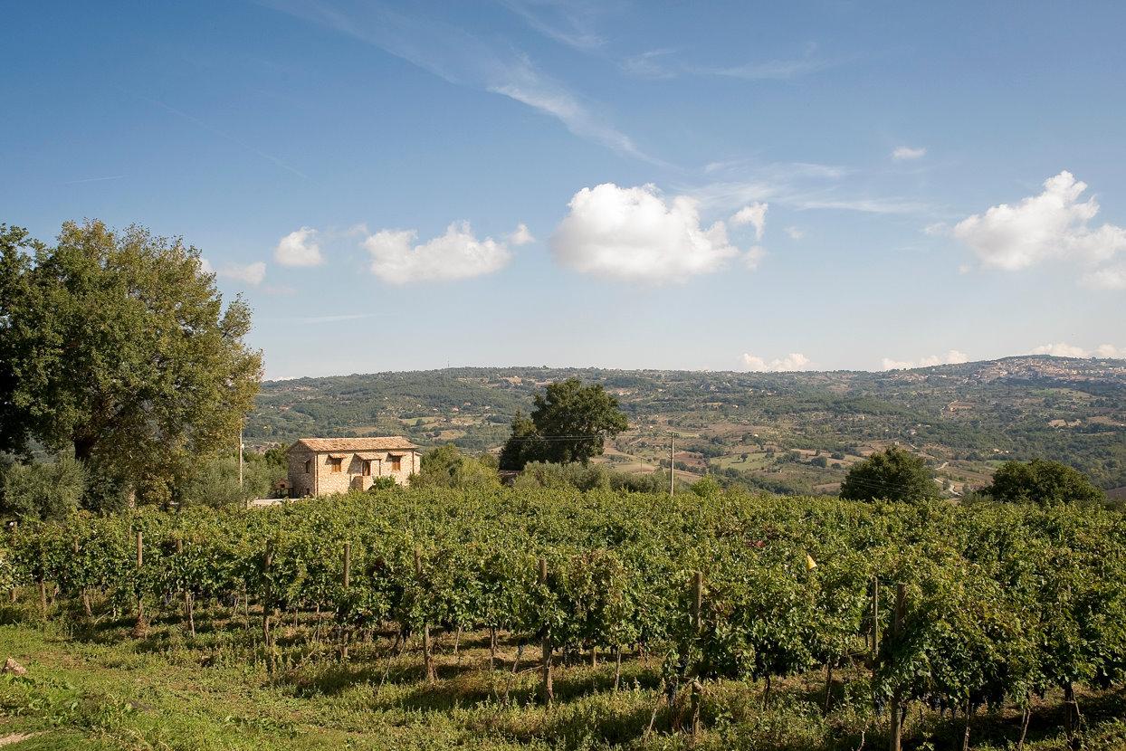 Campania - Fiano di Avellino