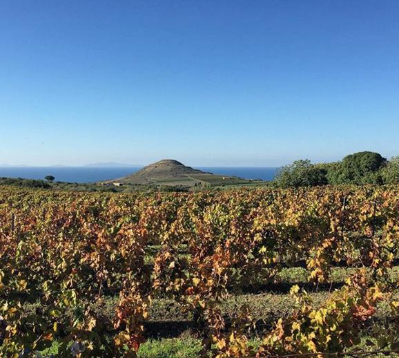 Sardegna - Cannonau di Sardegna