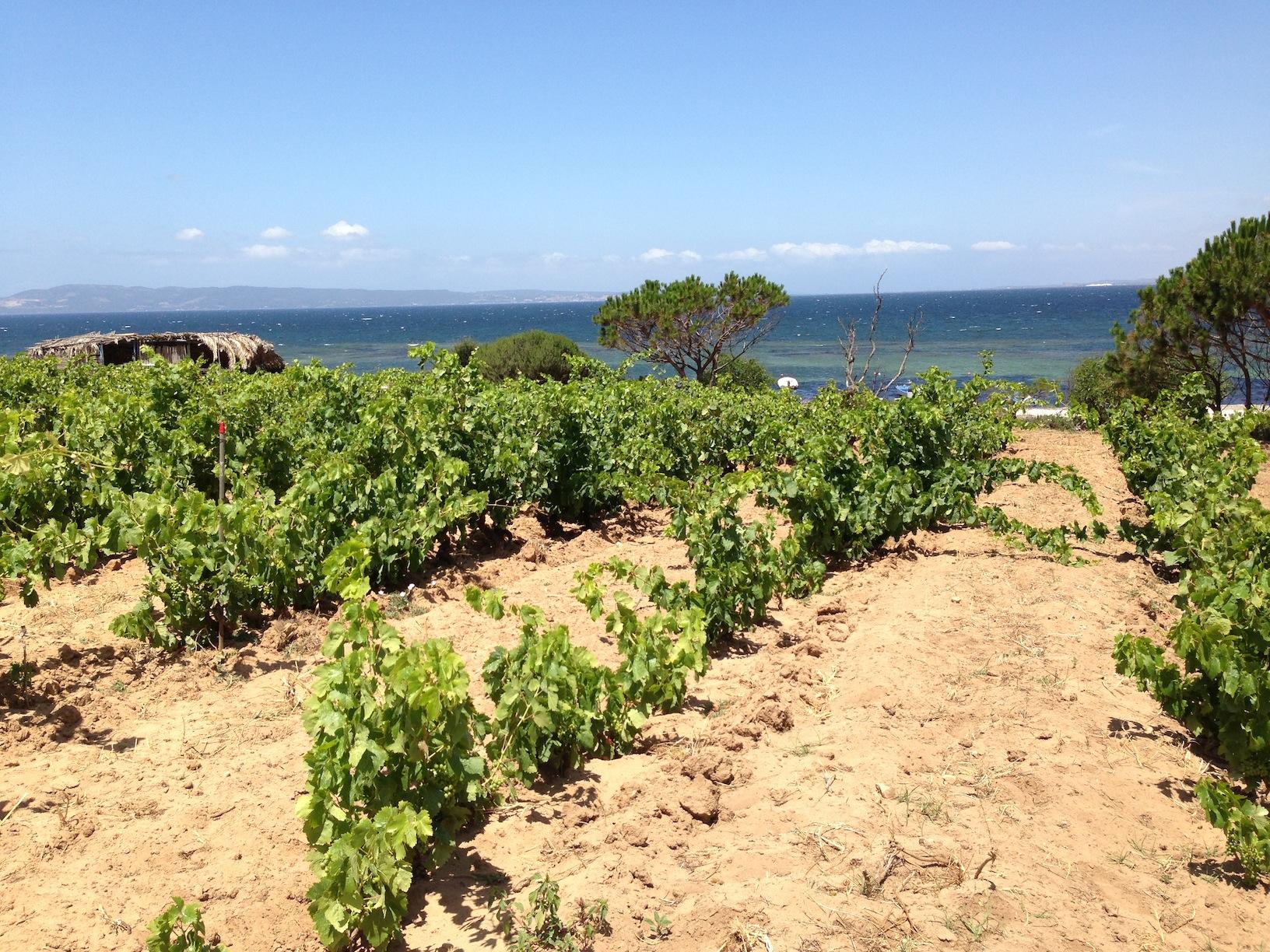 Sardegna - Carignano del Sulcis