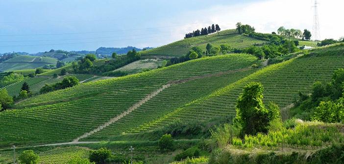 Piedmont - Roero
