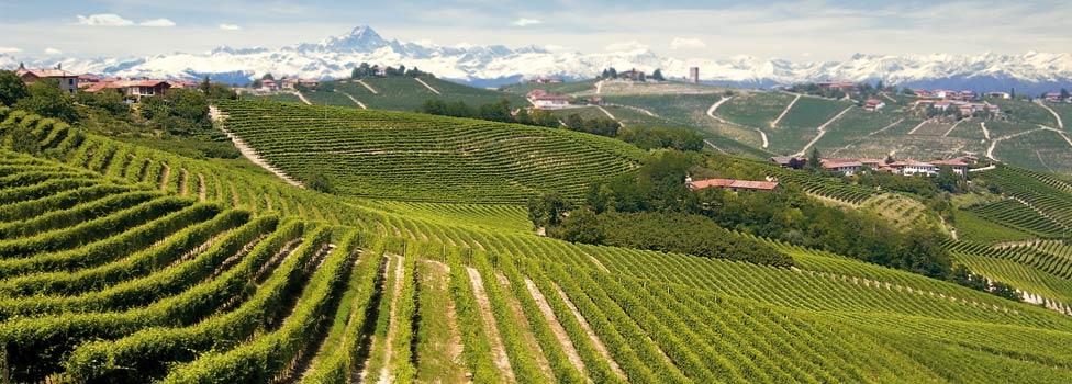 Piedmont - Alta Langa
