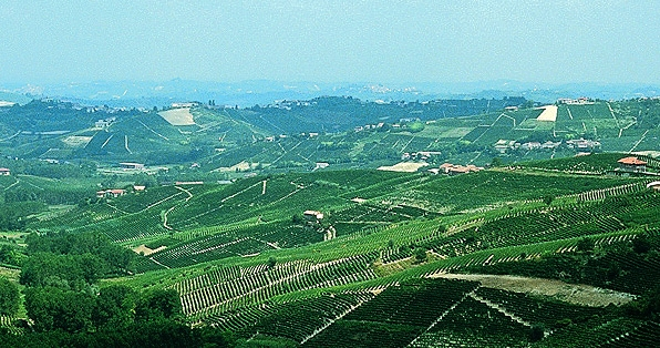 Piedmont - Barbera d'Asti