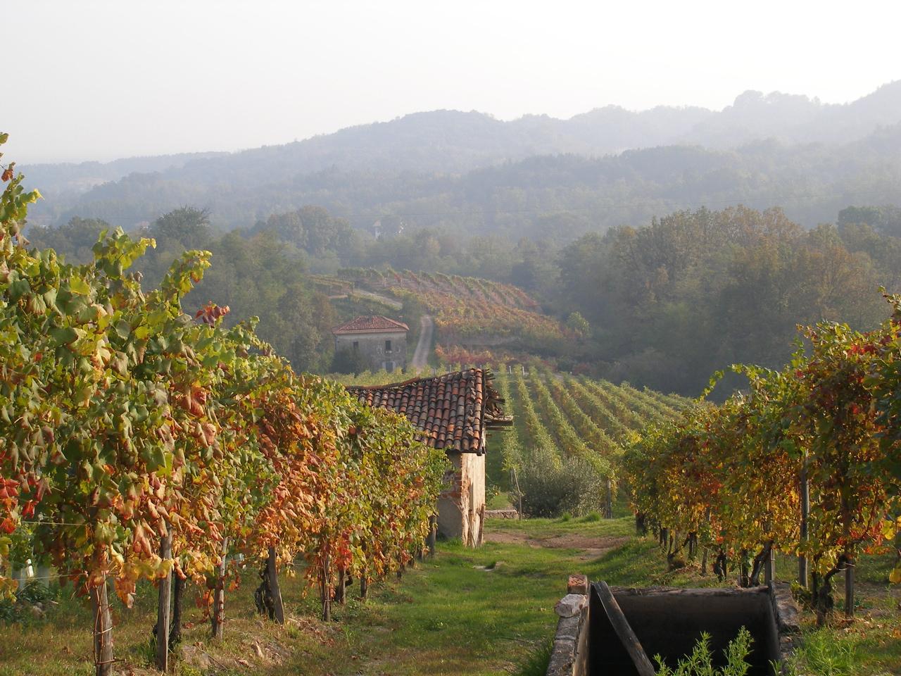 Piedmont - Boca