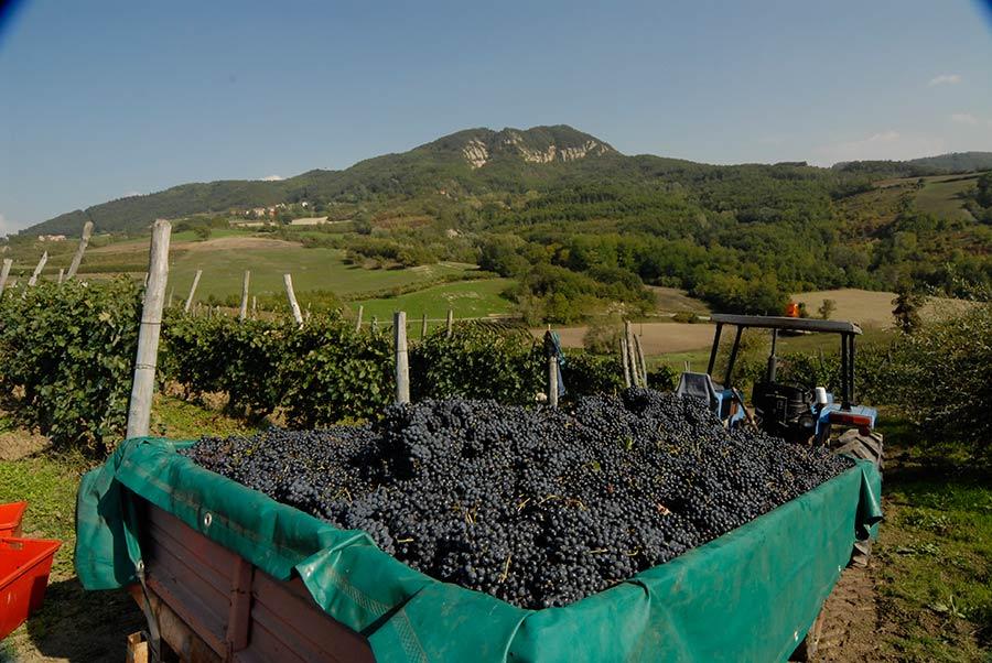 Piedmont - Colli Tortonesi