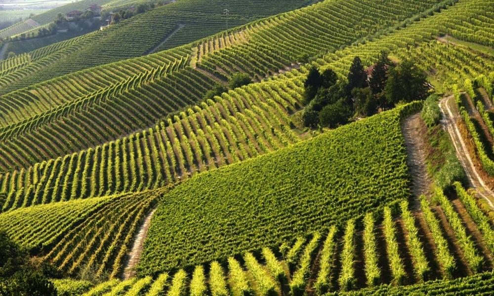 Piedmont - Dolcetto d'Asti