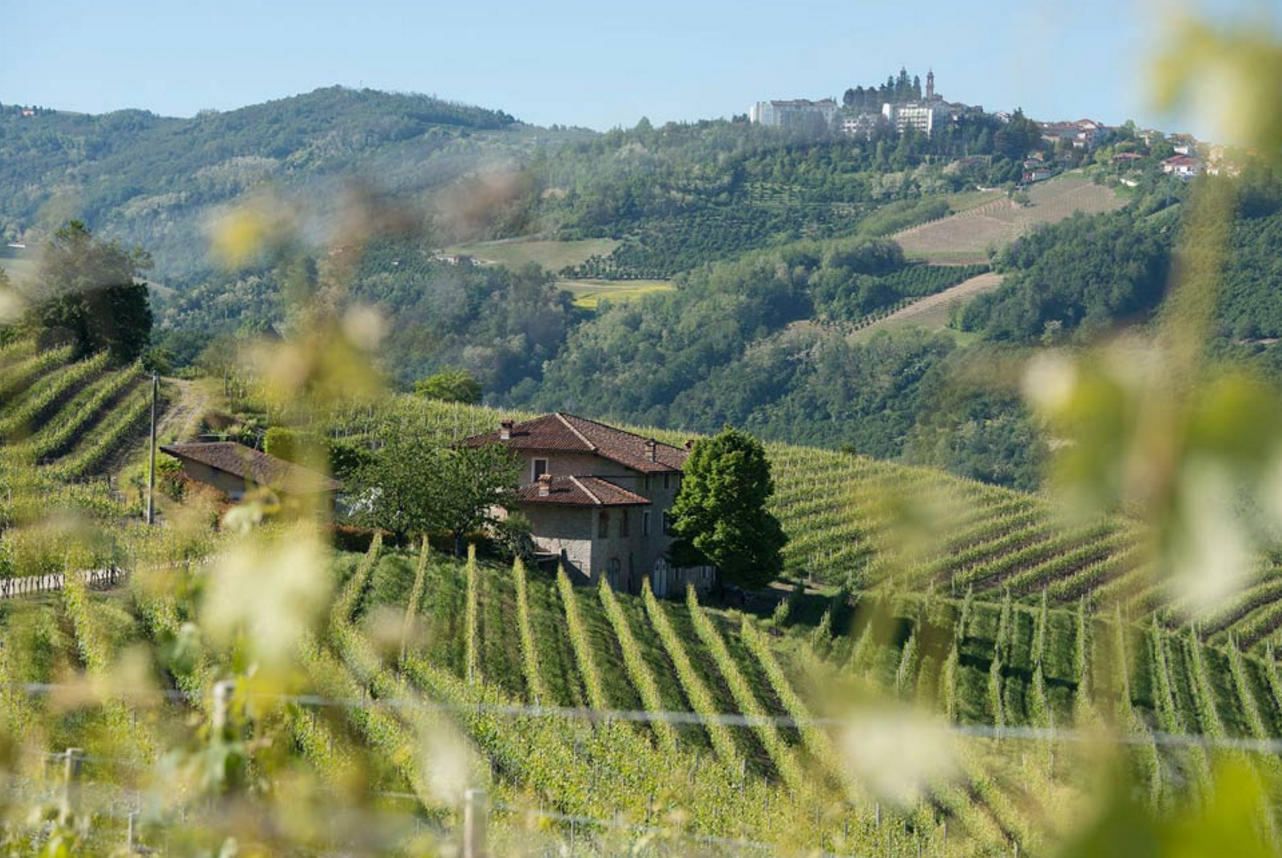 Piedmont - Diano d'Alba