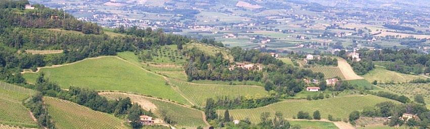 Emilia-Romagna - Ro. Albana