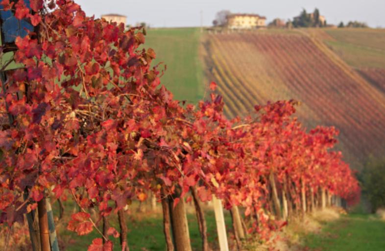 Emilia-Romagna - Lambrusco Grasparossa di Castelletto