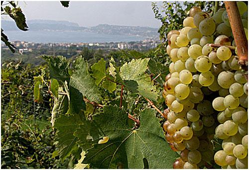 Campania - Campi Flegrei