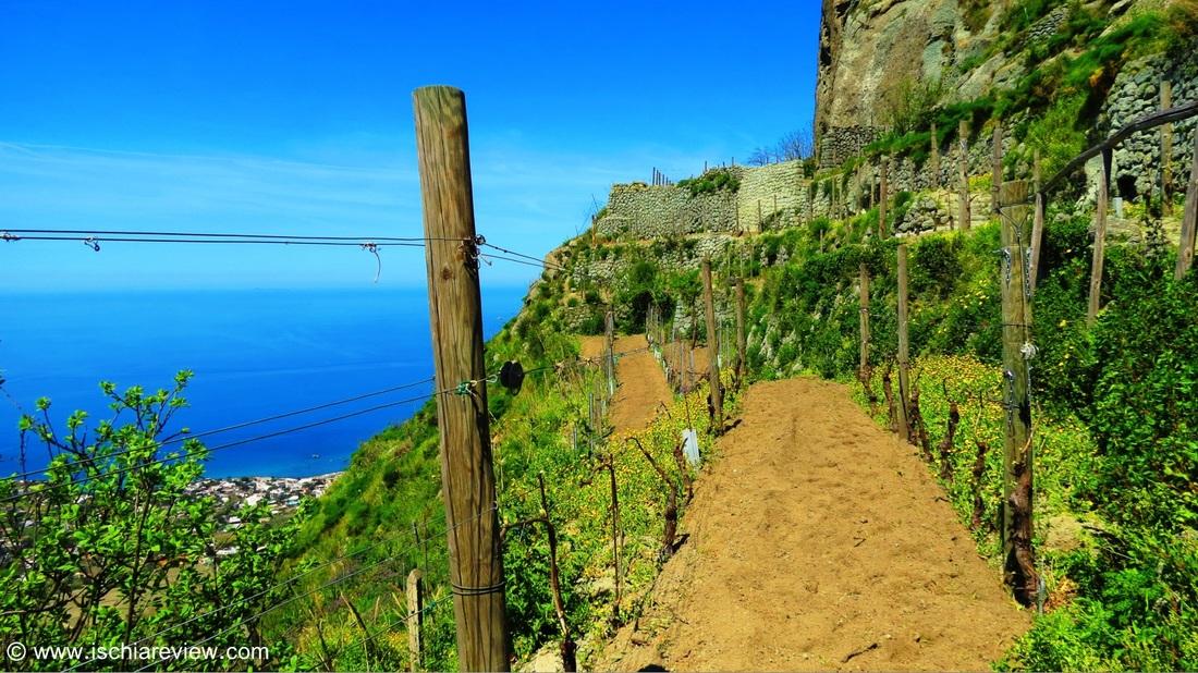 Campania - Ischia