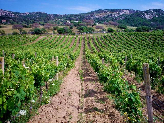 Sardegna - Vermentino di Sardegna