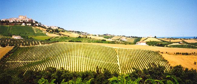 Marche - Falerio