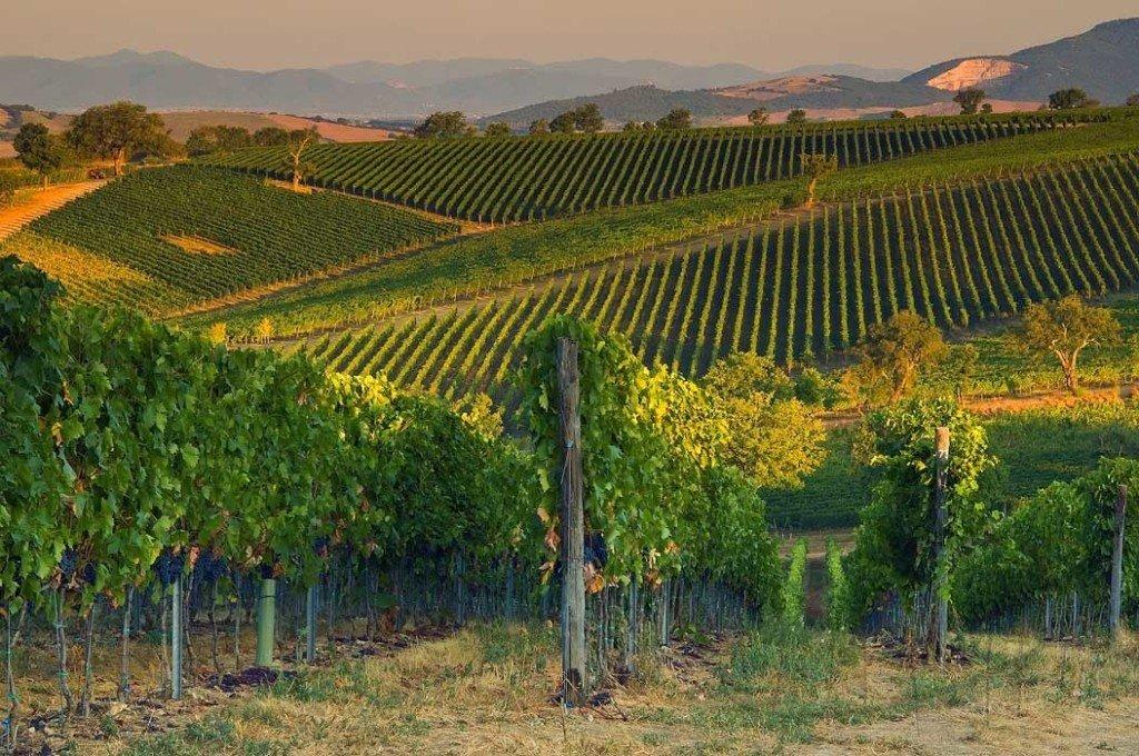 Tuscany - Morellino di Scansano
