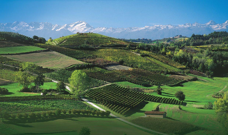 Piedmont - Langhe