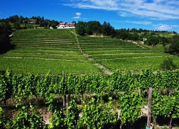 FVG - Friuli Isonzo