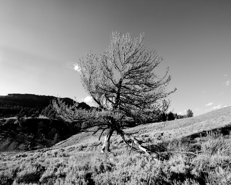 landscapes001.jpg
