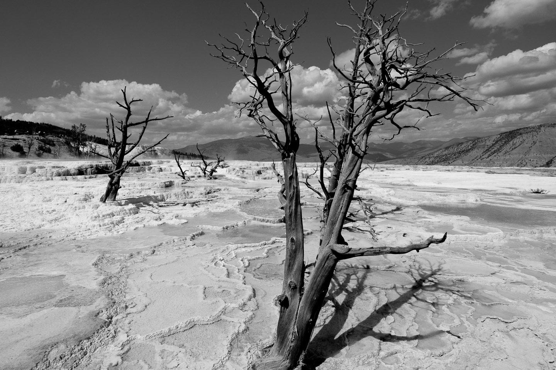 landscapes003.jpg