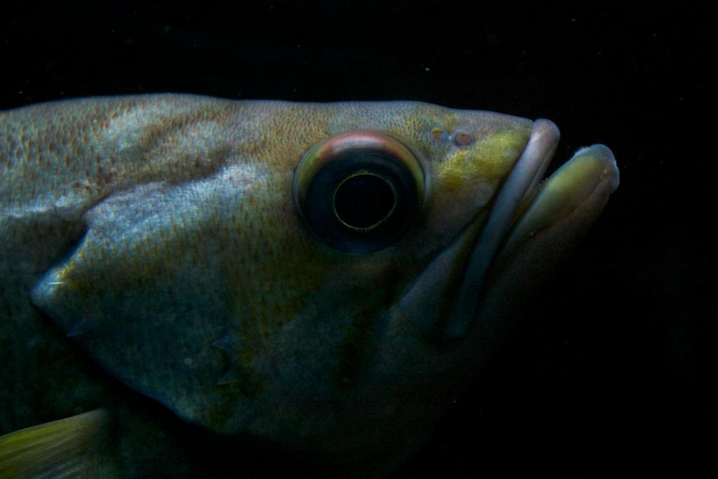 RainbowFish.jpg