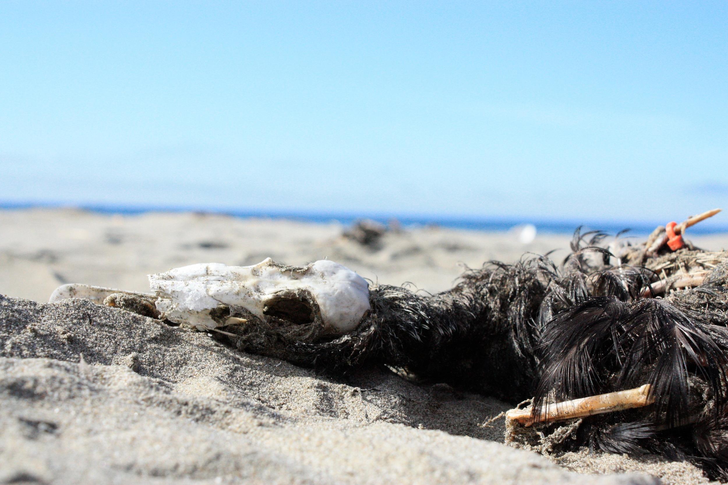 seabirds 1.jpg
