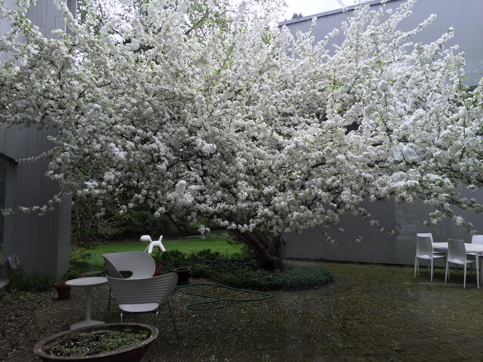 mansoor courtyard