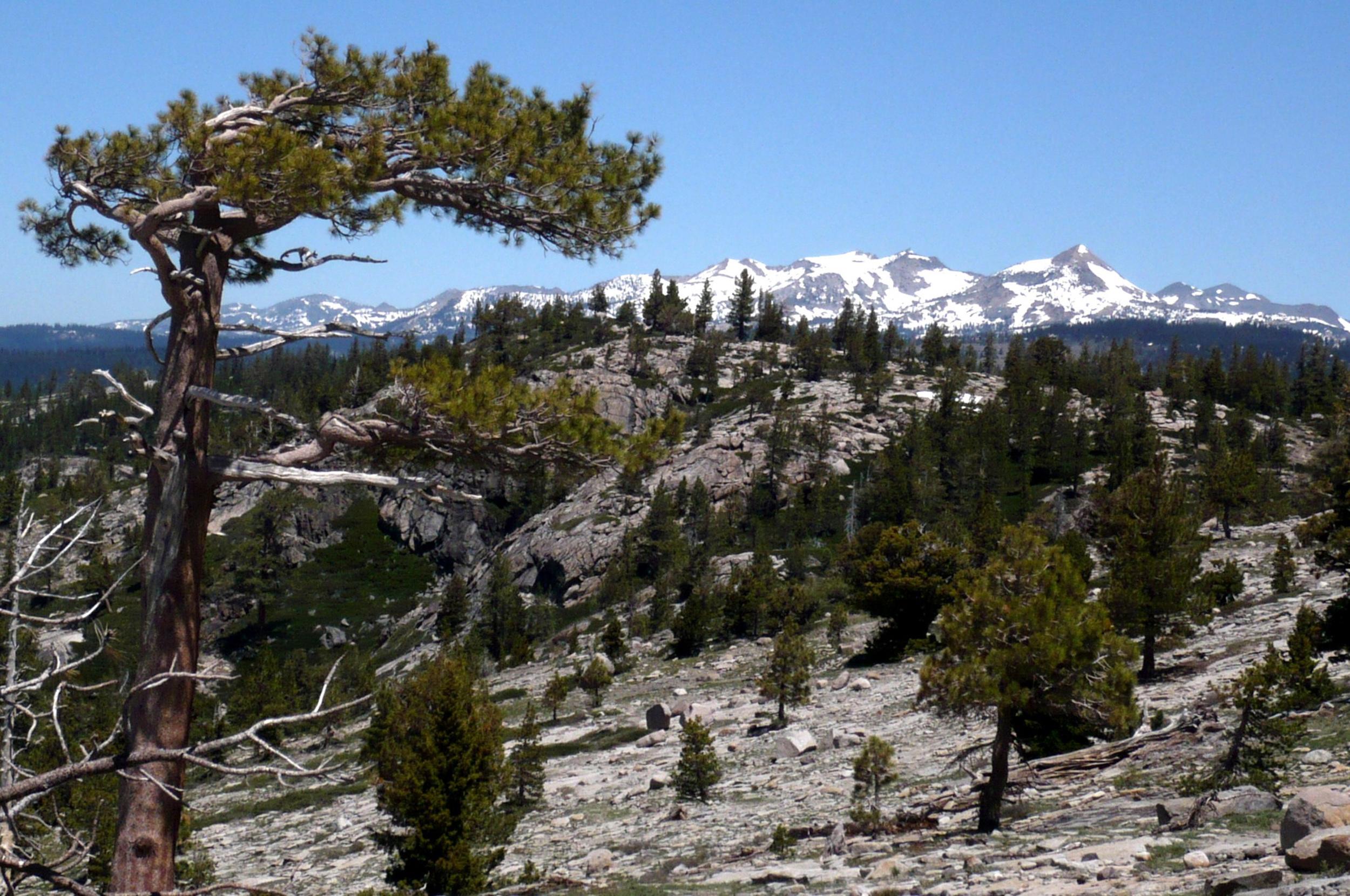 Mt Shasta-39.jpg