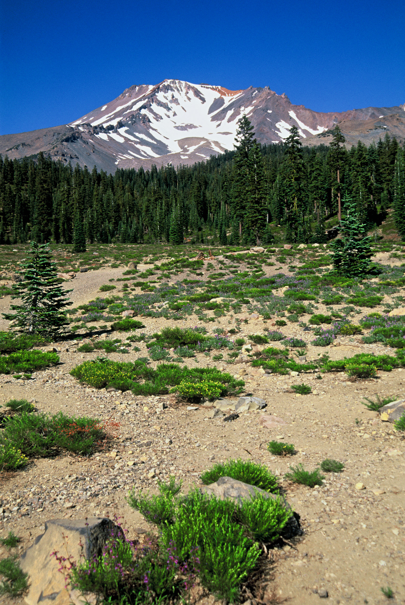 Mt Shasta, California
