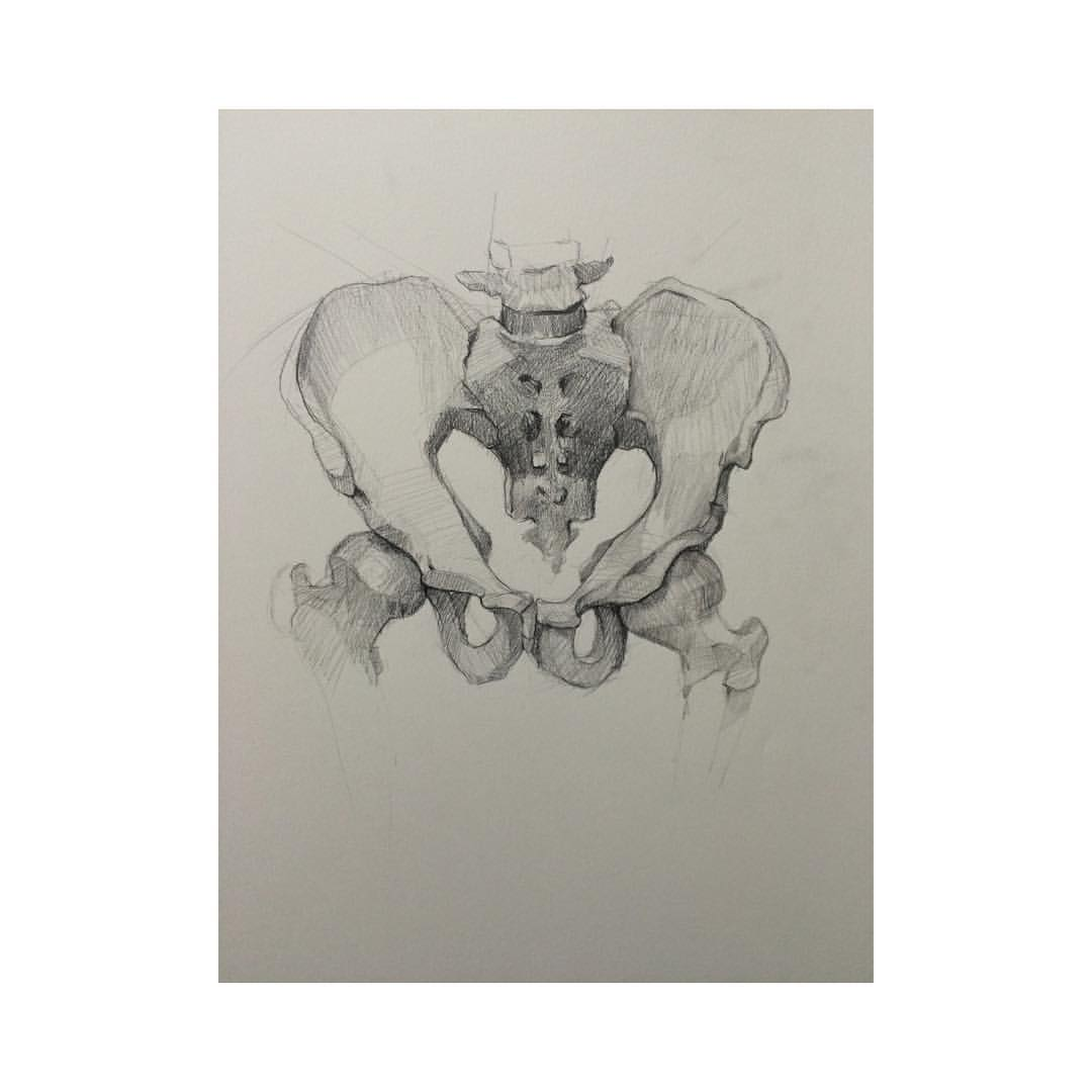 Pelvis study  #drawing #anatomy #pelvis #graphite #derwent #anatomydrawing #bones #skeleton