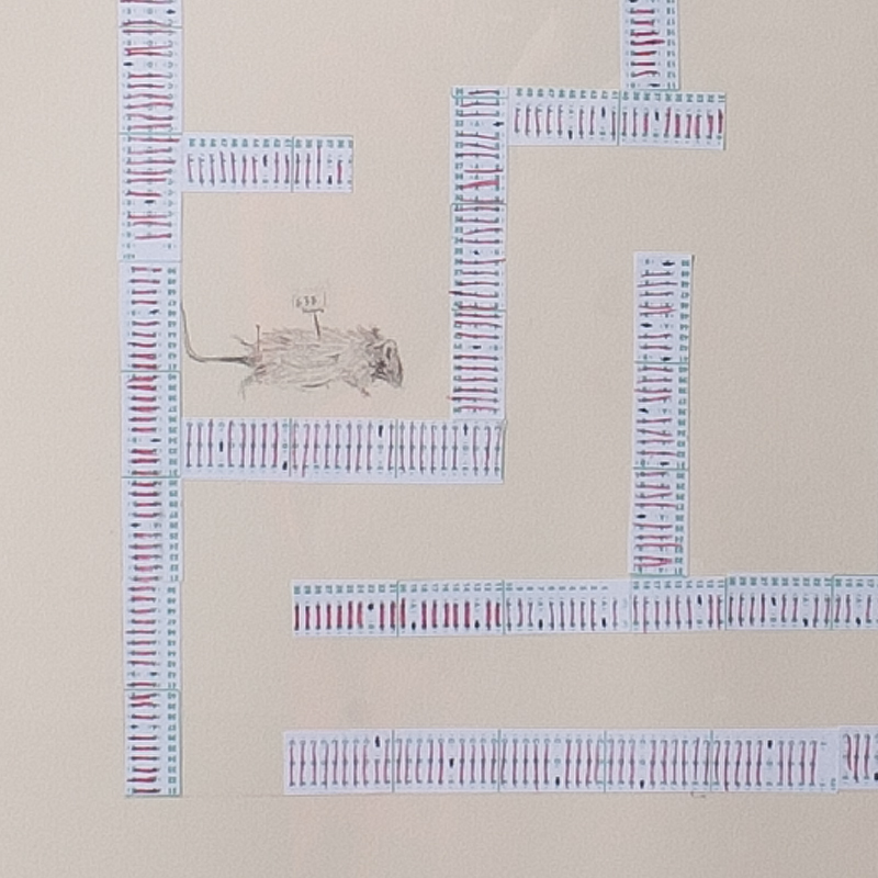 Maze 1 (detail)  Pencil, scantron, paper 27 x19 inches 2012