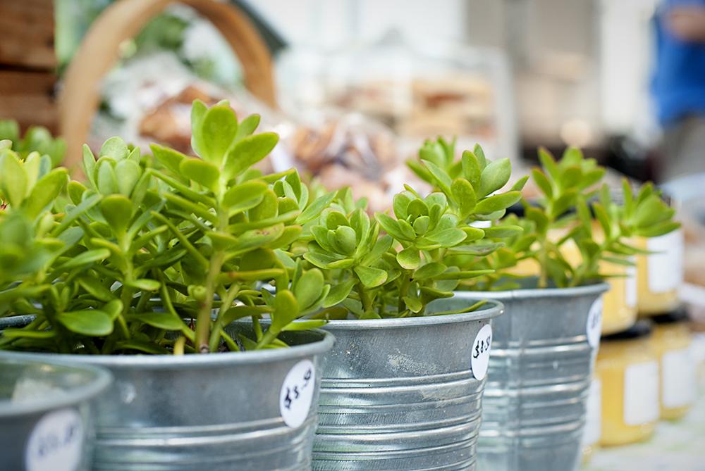 succulents_small.jpg