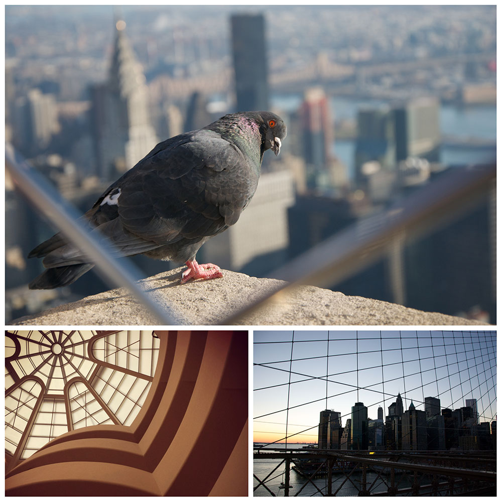 From the roof of the Empire State with the Chrysler in the background & a curious pigeon // The Guggenheim Museum // View from the Brooklyn Bridge